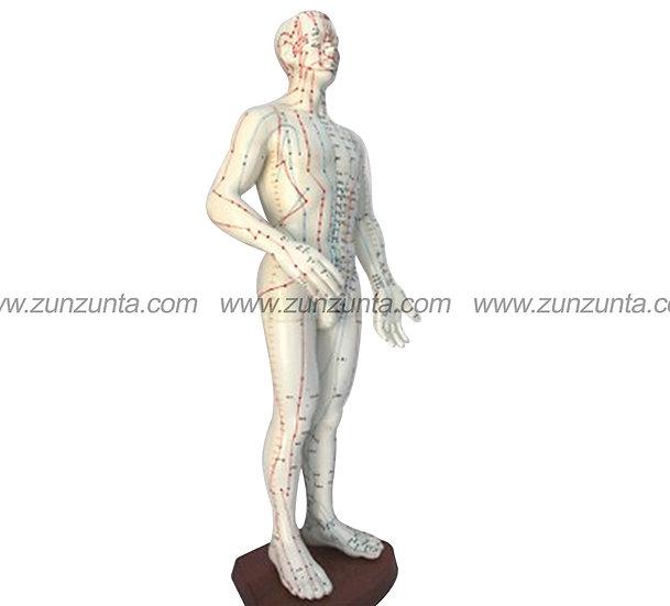 Modelo de cuerpo humano (26 cm)