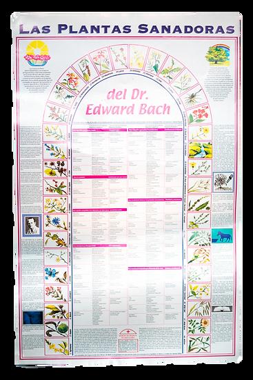 """Póster """"Las Plantas Sanadoras del Dr. Edward Bach"""""""