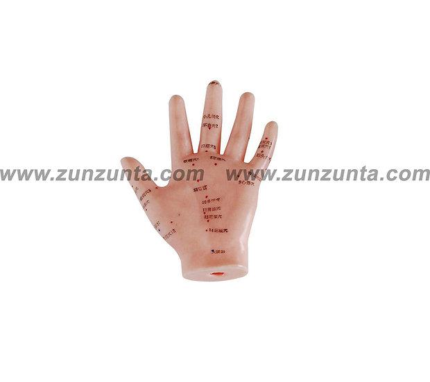 Modelo de mano (13 cm)