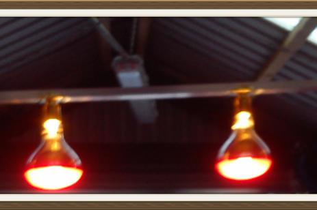 4 LAMP MINI SOLARIUM