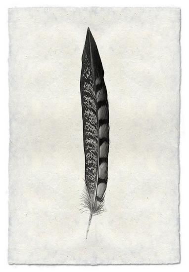 FEATHER STUDY #11 (LADY AMHERST PHEASANT TAIL)
