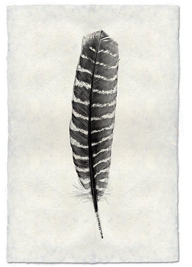 FEATHER STUDY #16 (WILD TURKEY)