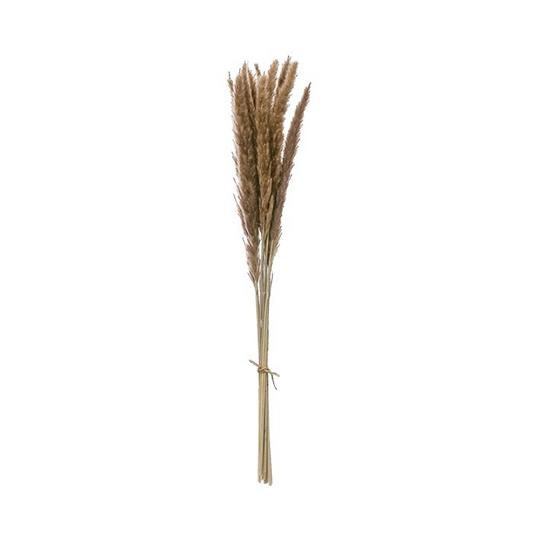 Dried Natural Fountain Grass