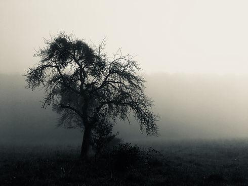 Baum im Morgennebel.jpg