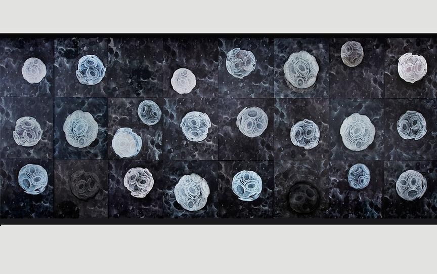 Emiliania huxleyi exhibition work, 788 x 321cm