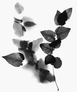 aromatic21.jpg