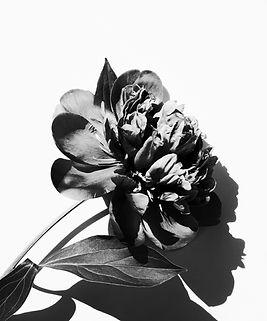 floral single1 .jpg
