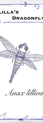 Anax lillivanicus