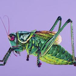 Grasshopper on purple