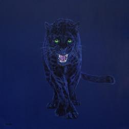 Black leopard on dark blue