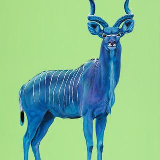 Kudu in blue