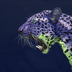 Purple leopard on dark blue