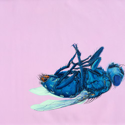 Fly on pink