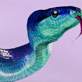 Snake on light violet