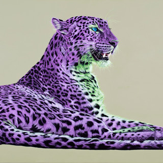 Leopard in magenta and green