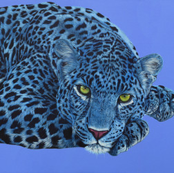 Blue leopard with yellow eyes