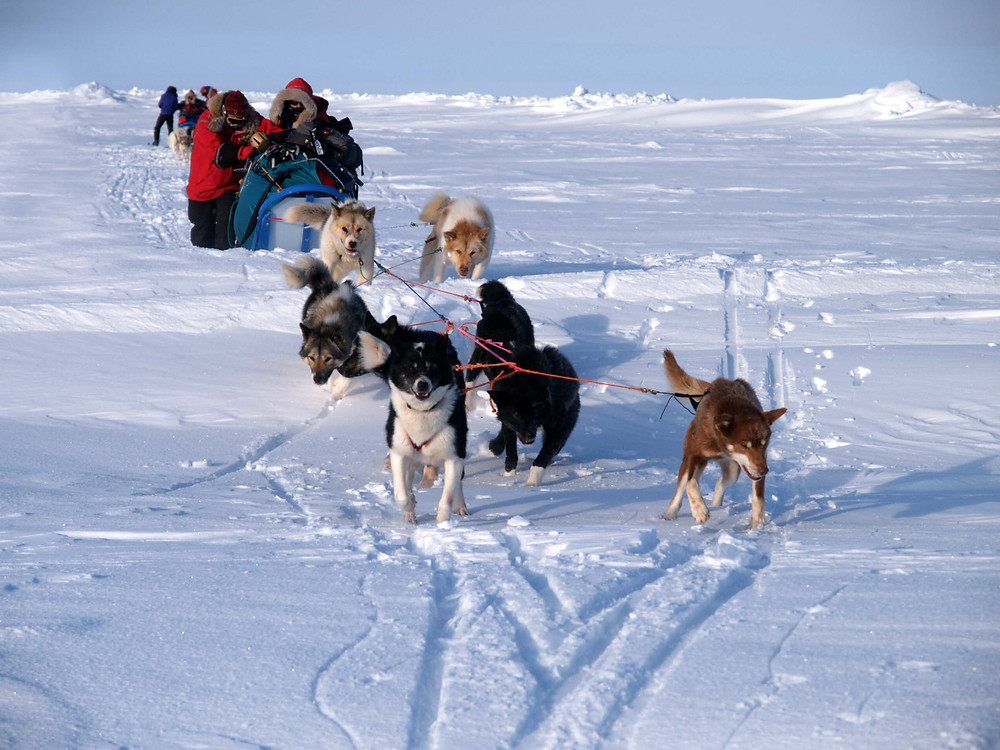 A team of dogs pulls a dogsled to the North Pole as expedition team members help push. Image from a North Pole Dogsled Expedition organized by PolarExplorers