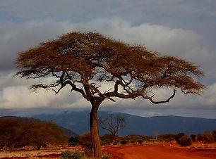 safari-16949_640.jpg