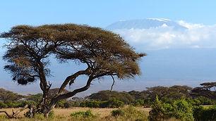 kilimanjaro-720845_640.jpg