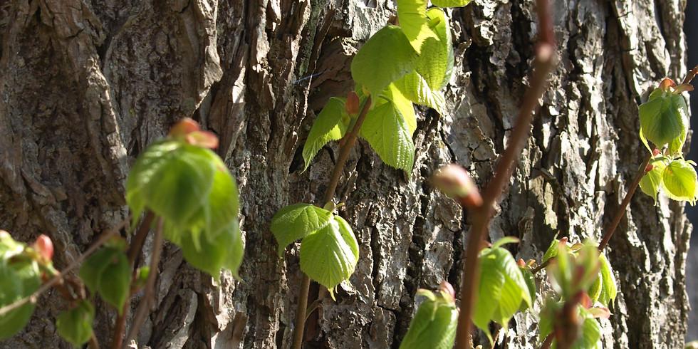 Lad batterierne op i Thy – yoga, natur og stilhed i det spæde forår