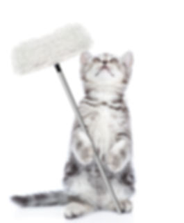 Cleaning concept. Kitten holds mop in pa