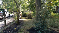 Understory shrubs