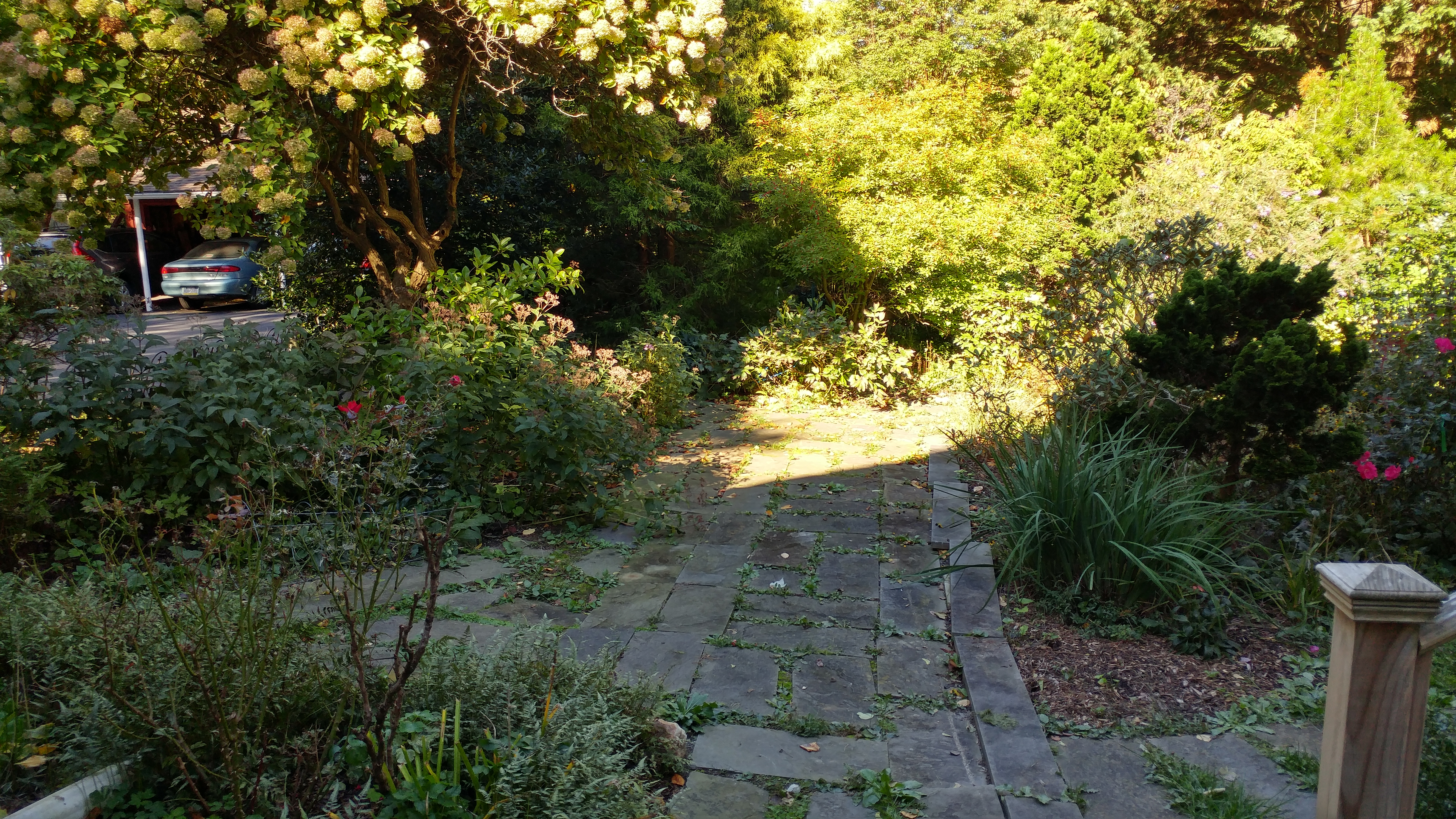 Rear Pathway Before