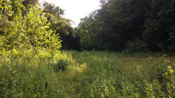 Dry Meadow