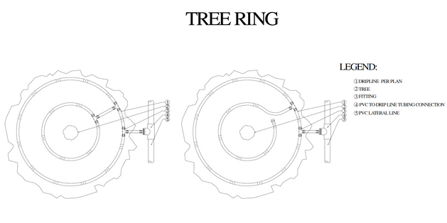 Tree ring.png