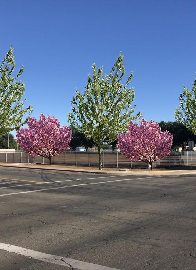 Civic Center - Cherry Spring.jpg