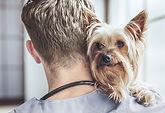 hundepass i bærum