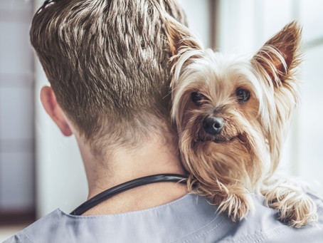 Microchipping: Increasing Your Pet's Chances of a Happy Ending