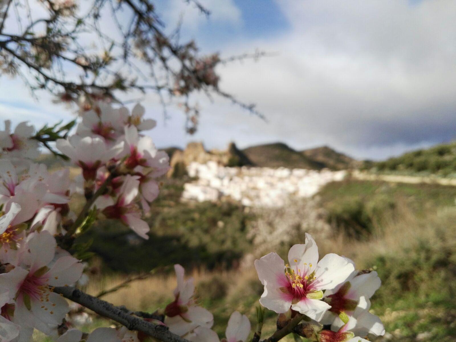 almendros flor 2