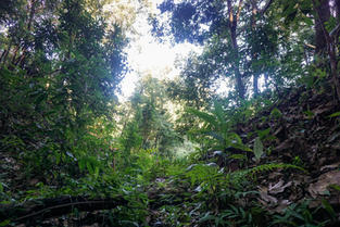 Forest in Thailand_Photo by Robin Bustam