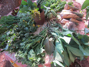 forest food cambodia.jpg