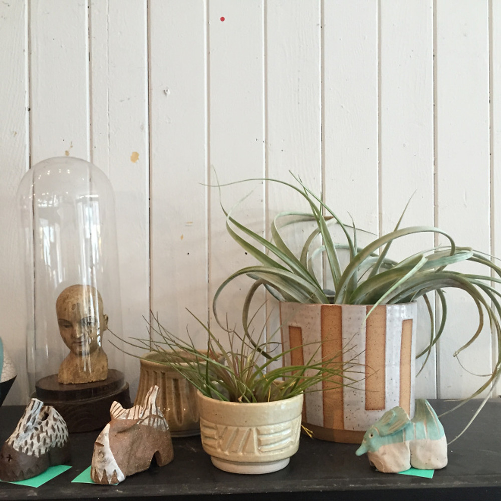 cute plants and objects at Bell Jar