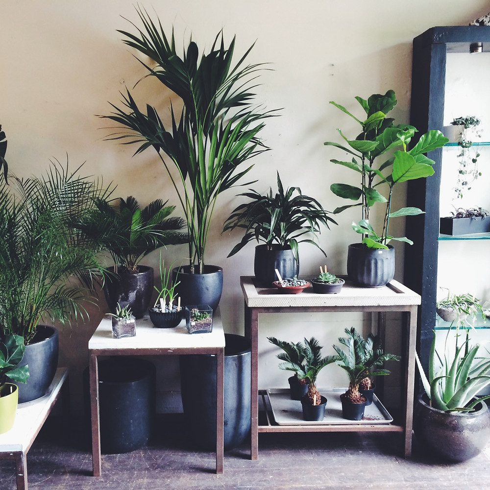 beautiful color palette of plants and pots at The Palm Room