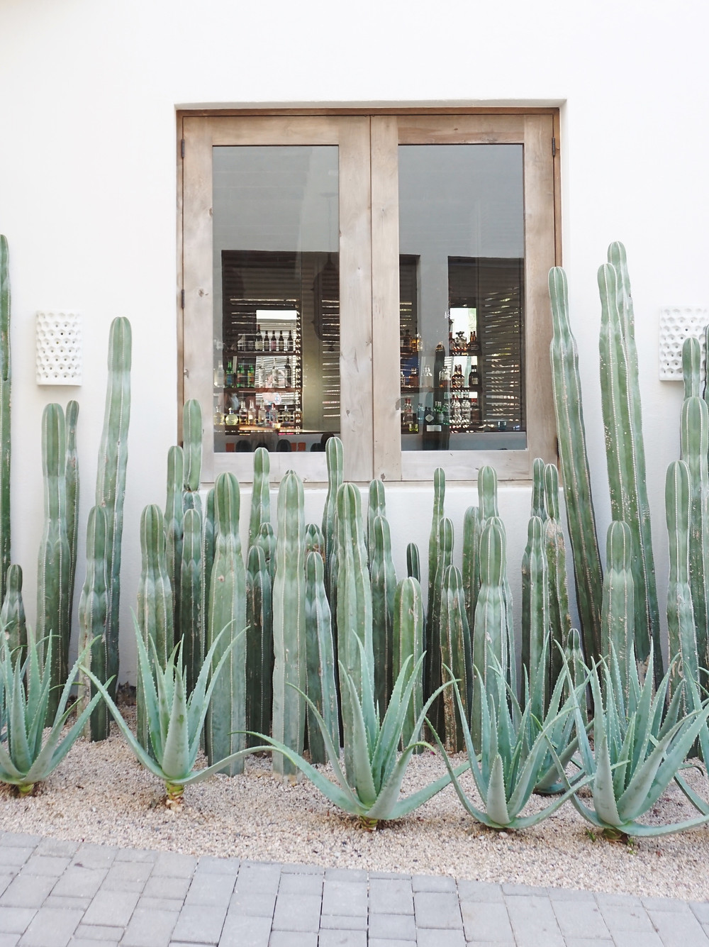 The Beautiful Cacti greeted us at San Cristobal in Todos Santos