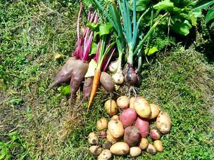 Технология в риелторском и огородном деле. Удивительные параллели.
