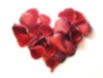 RoseFotolia_29080201_XL.jpg