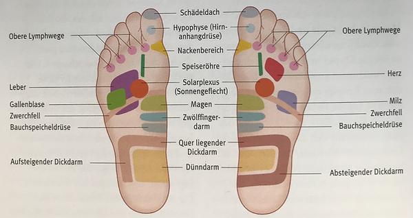 Fußreflexzonen Unterseite.png