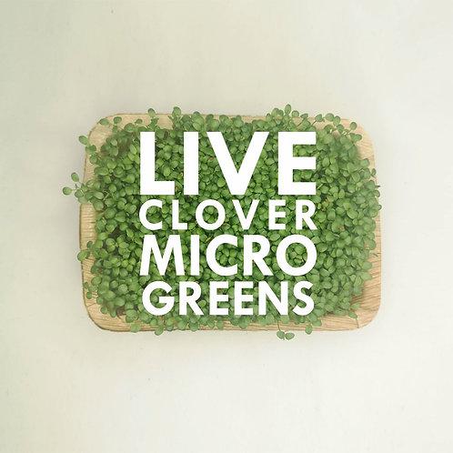 Live Clover Microgreens