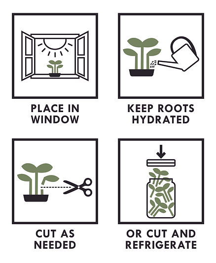 How to Care for Live Microgreens.jpg