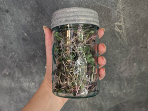 How to Store Microgreens