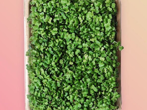 Eco-Friendly Microgreen Packaging