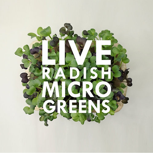 Live Radish Microgreens