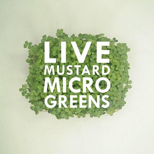 Live Mustard Microgreens