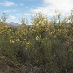 Palo Verde at Burnstein Conservation Easement