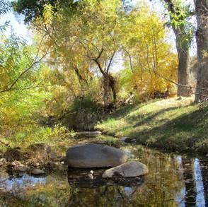 Jewel of the Creek - water in the creek