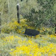 saguaro-hill-bench